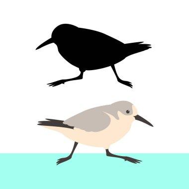 sandpiper bird vector illustration flat style  black