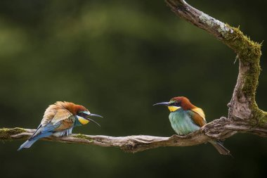 These birds can be angry when interrupt.