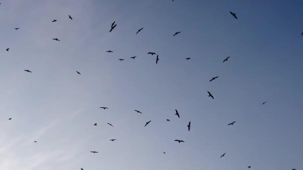 modré nebe a létající racky
