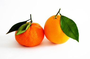 Orange and mandarin pictures on the most beautiful and best white background