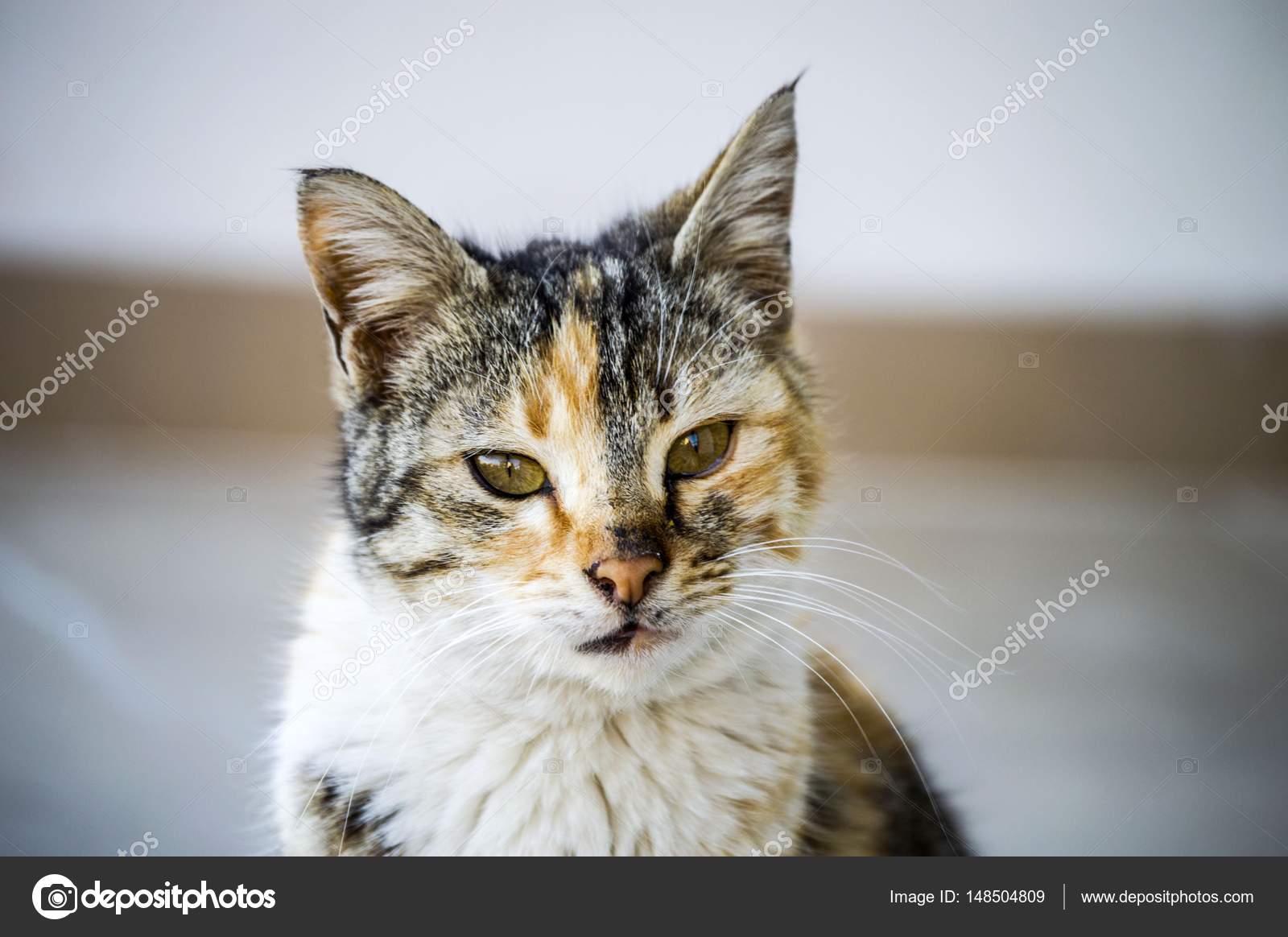 noir chatte Pictur