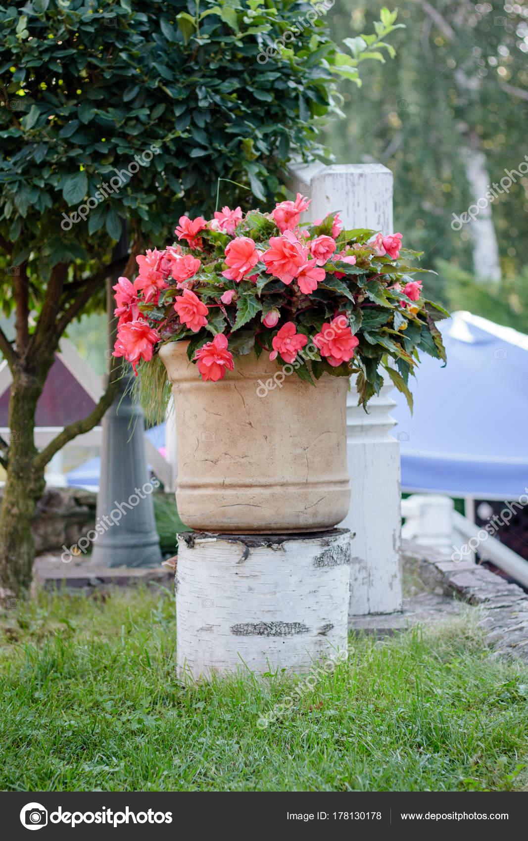 großer blumentopf mit begonien blumen am park — stockfoto