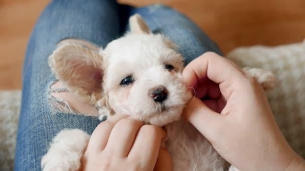 close-up záběry malé holčičky tráví čas se svým bišonem štěně