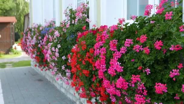 közeli felvétel gyönyörű virágzó virágok a háttérben