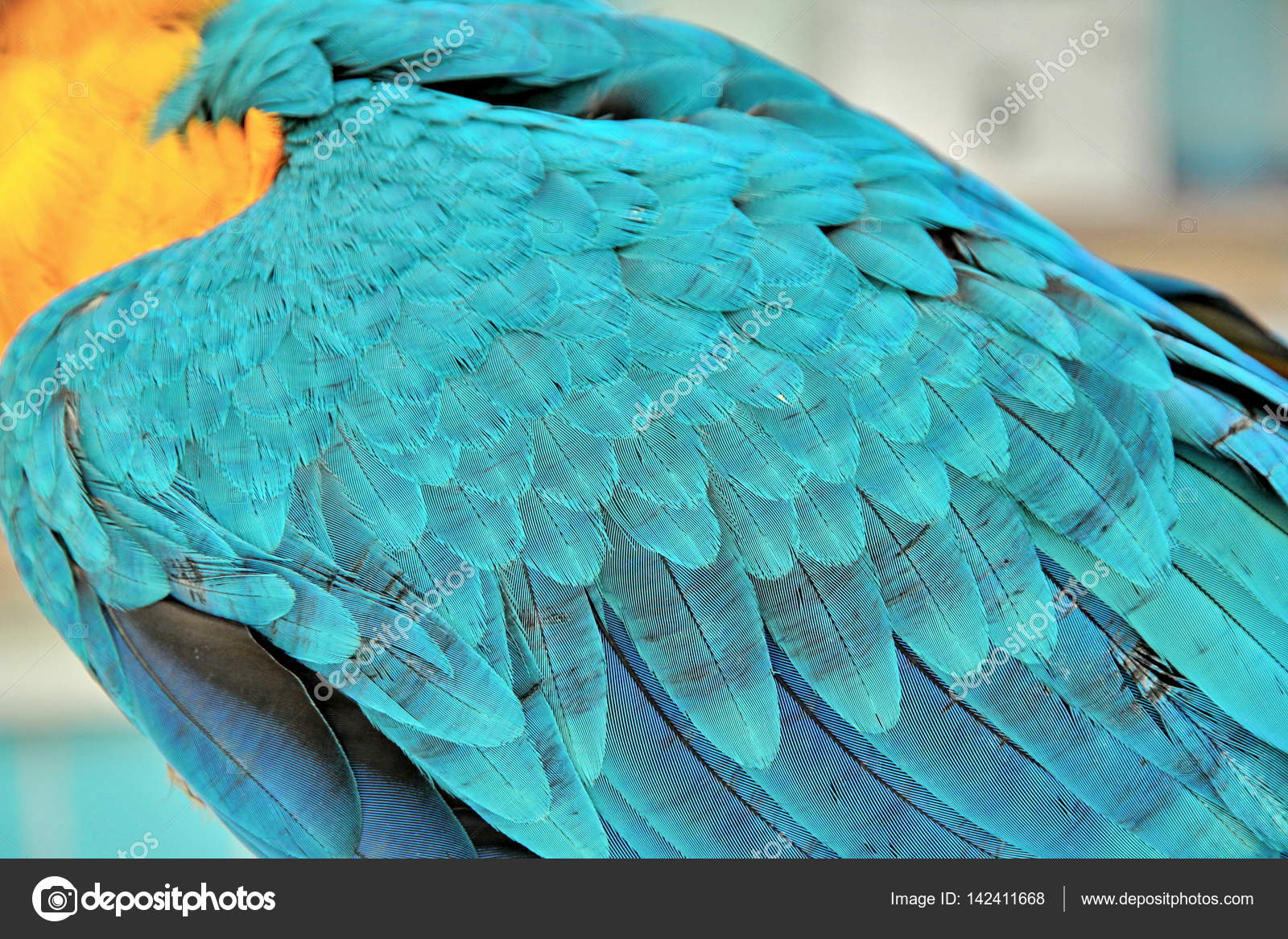 Veren In Huis : 3 maanden blauw en gele ara mooie kleur veren u2014 stockfoto