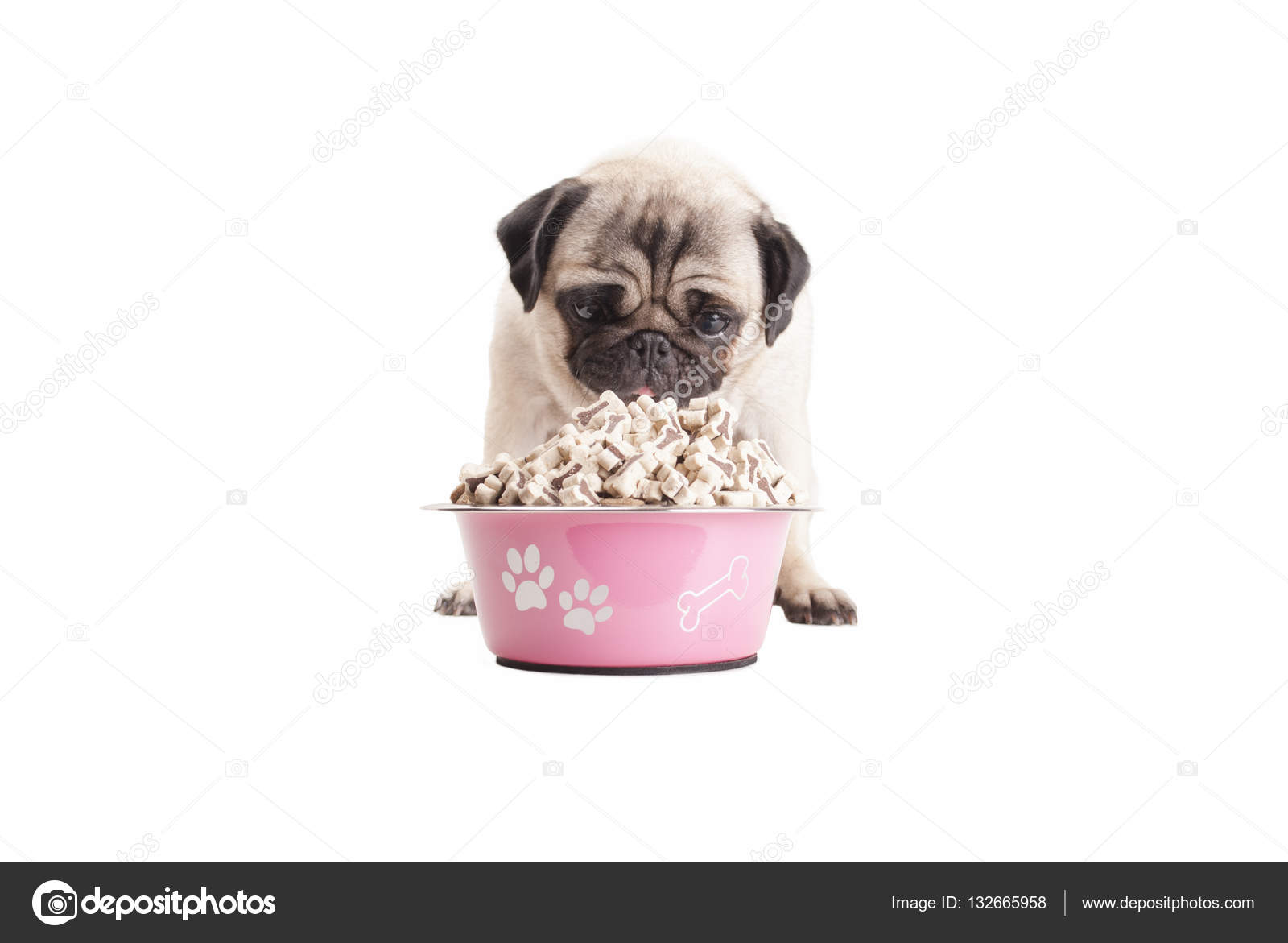 Best Dry Food For Pugs