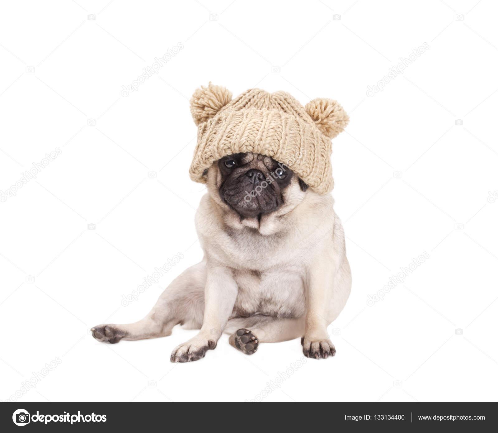 Cane di cucciolo del pug dolce seduto e indossando un beige maglia cappello  con pompon 2329c0f12b01