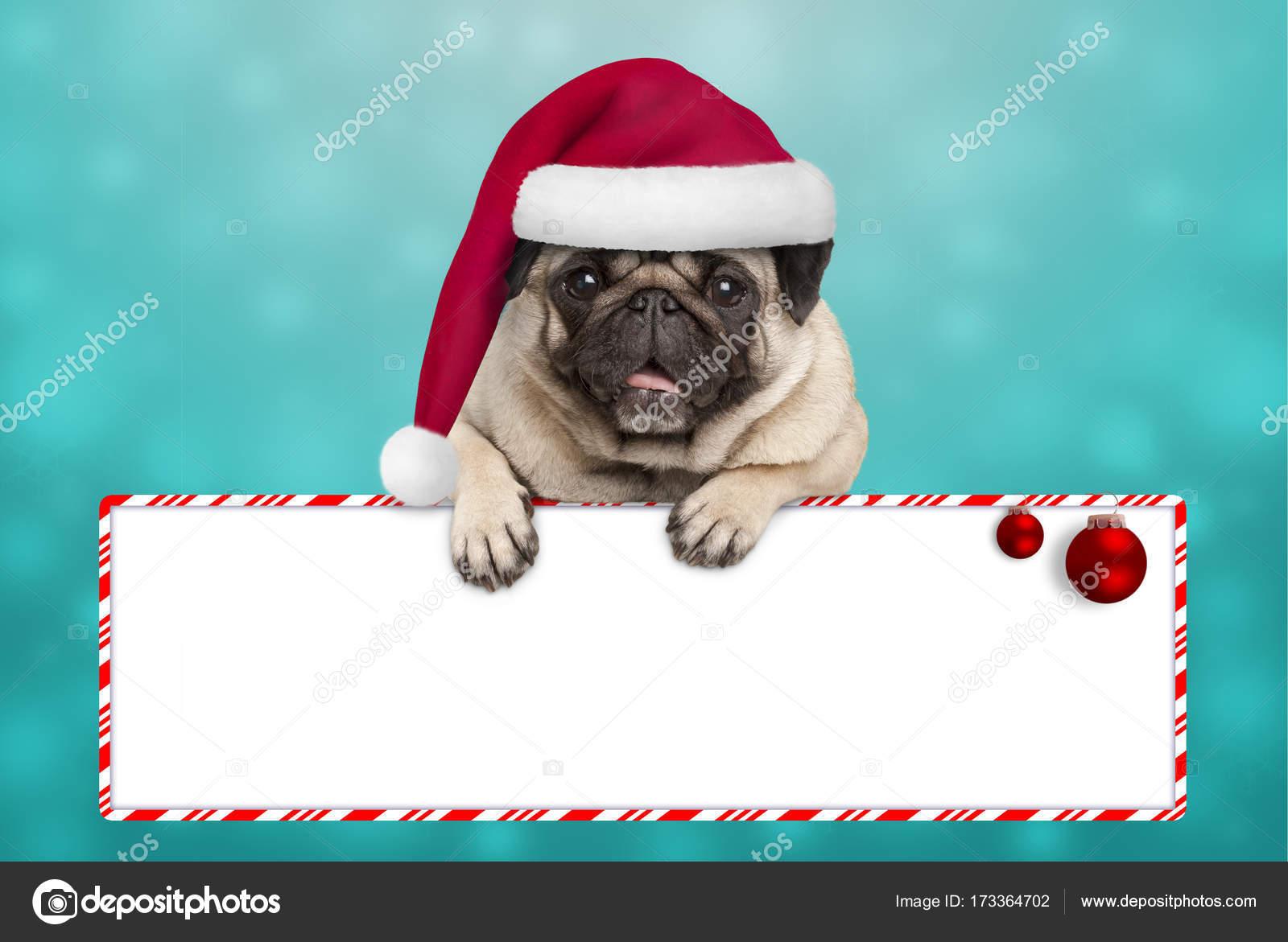 Mops Bilder Weihnachten.Süß Lächelnd Weihnachten Mops Welpen Hund Mit Weihnachtsmütze