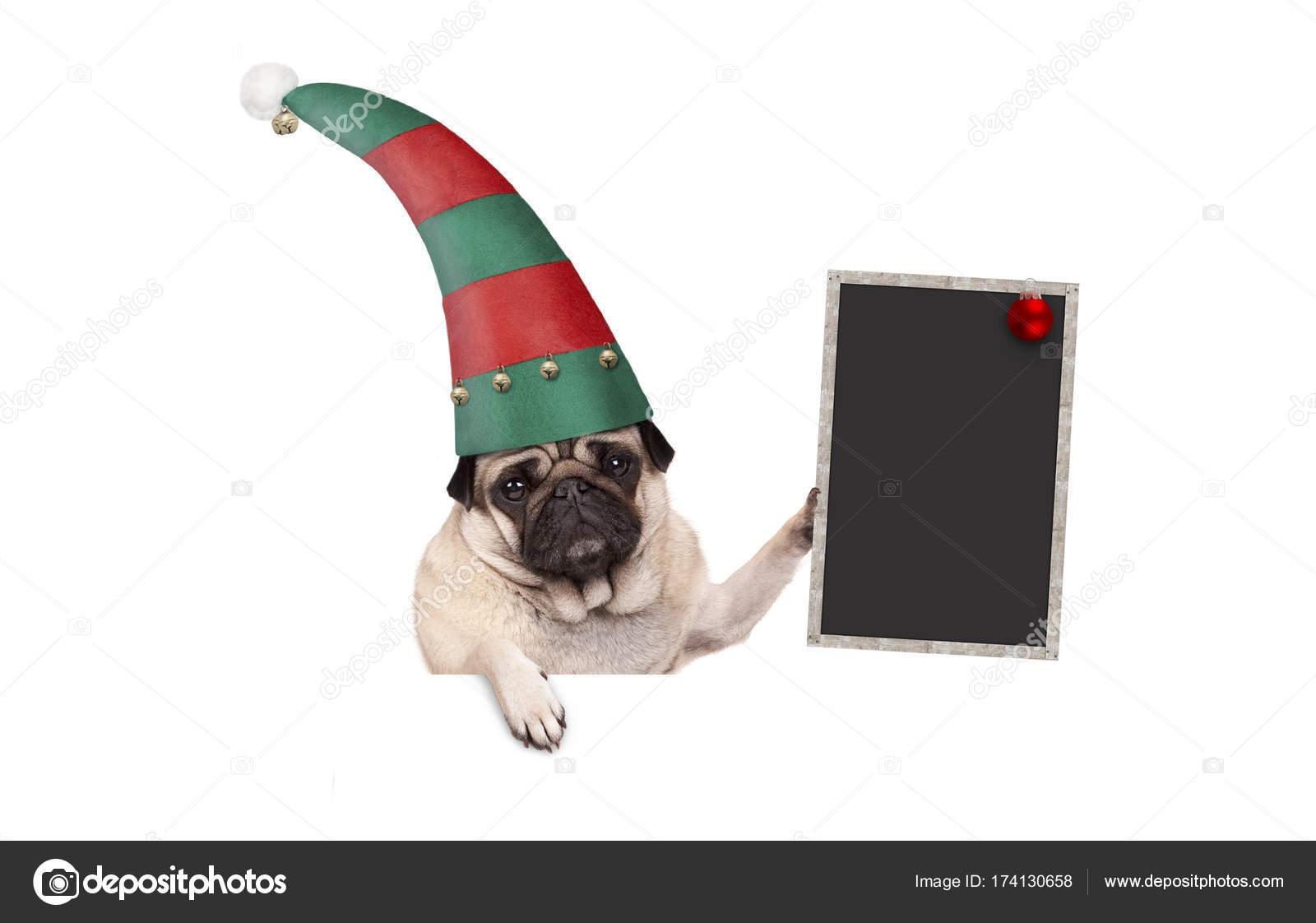 532bce78b2007 Navidad pug cachorro perro con sombrero de elfo rojo y verde con letrero de  pizarra en