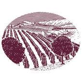 Fotografia Vigneto sceneic linea Illustratiion