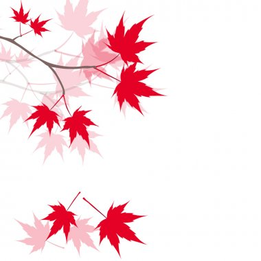 Red maple leaves on the branches. Japanese red maple. illustration