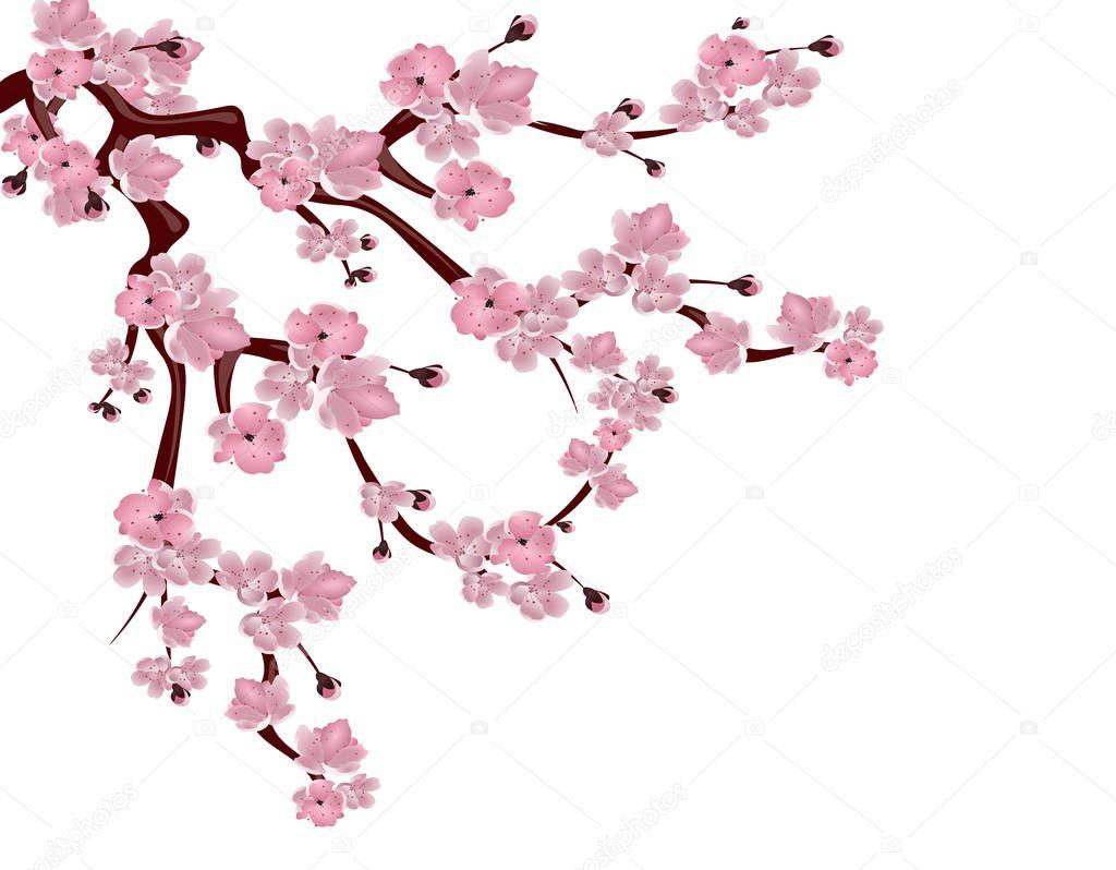 Japońska Wiśnia Drzewo. Rozprzestrzeniania Się Gałąź