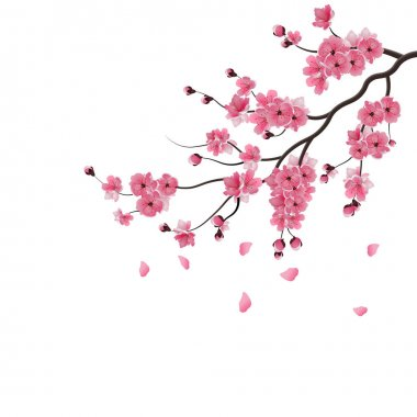 Japanese sakura. The branch of dark pink sakura blossom. Isolated on white background. illustration
