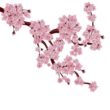 Lush Japanese cherry tree. The branch of pink sakura blossom. Isolated on white background. illustration