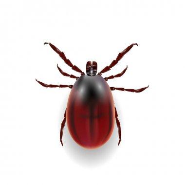 Harvest bug on a white background wiht shadow. illustration
