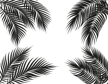 Tropical black and white palm leaves on four sides. Set. Isolated on white background. illustration