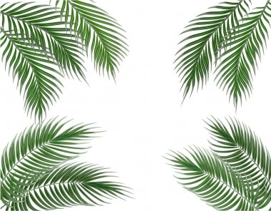 Tropical green palm leaves on four sides. Set. Isolated on white background. illustration