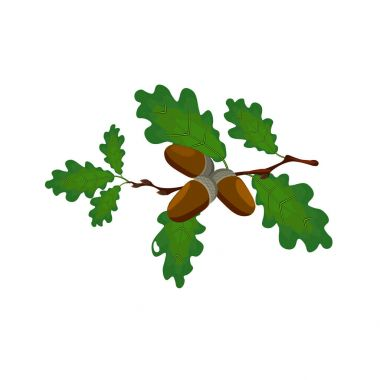 Green oak branch with acorns. Volumetric drawing without a mesh and a gradient. Isolated on white background. illustration