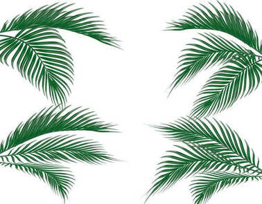 Different in form tropical dark green palm leaves on four sides. Set. Isolated on white background. illustration