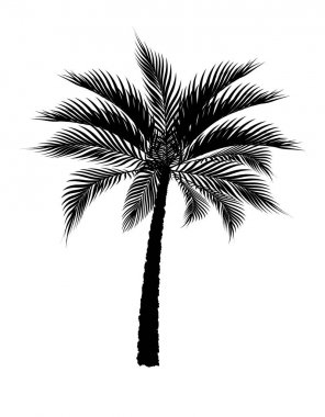A tropical palm tree in black. Isolated on white background. illustration