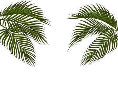 Different in form tropical dark green palm leaves on both sides. Isolated on white background without a mesh and gradient. illustration