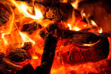 Burning camp fire wood. Close Up view