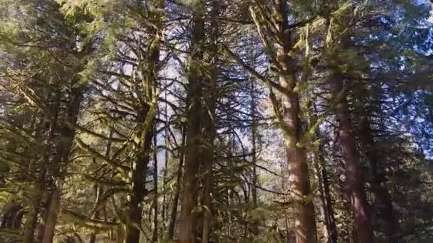 Schöne Aussicht auf grüne Bäume in der Natur an einem sonnigen Wintertag.
