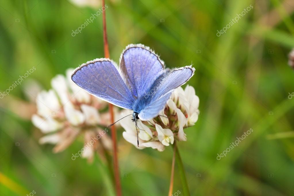 Le Bleu Grand Rare Magnifique Papillon Bleu Photographie Jeanree
