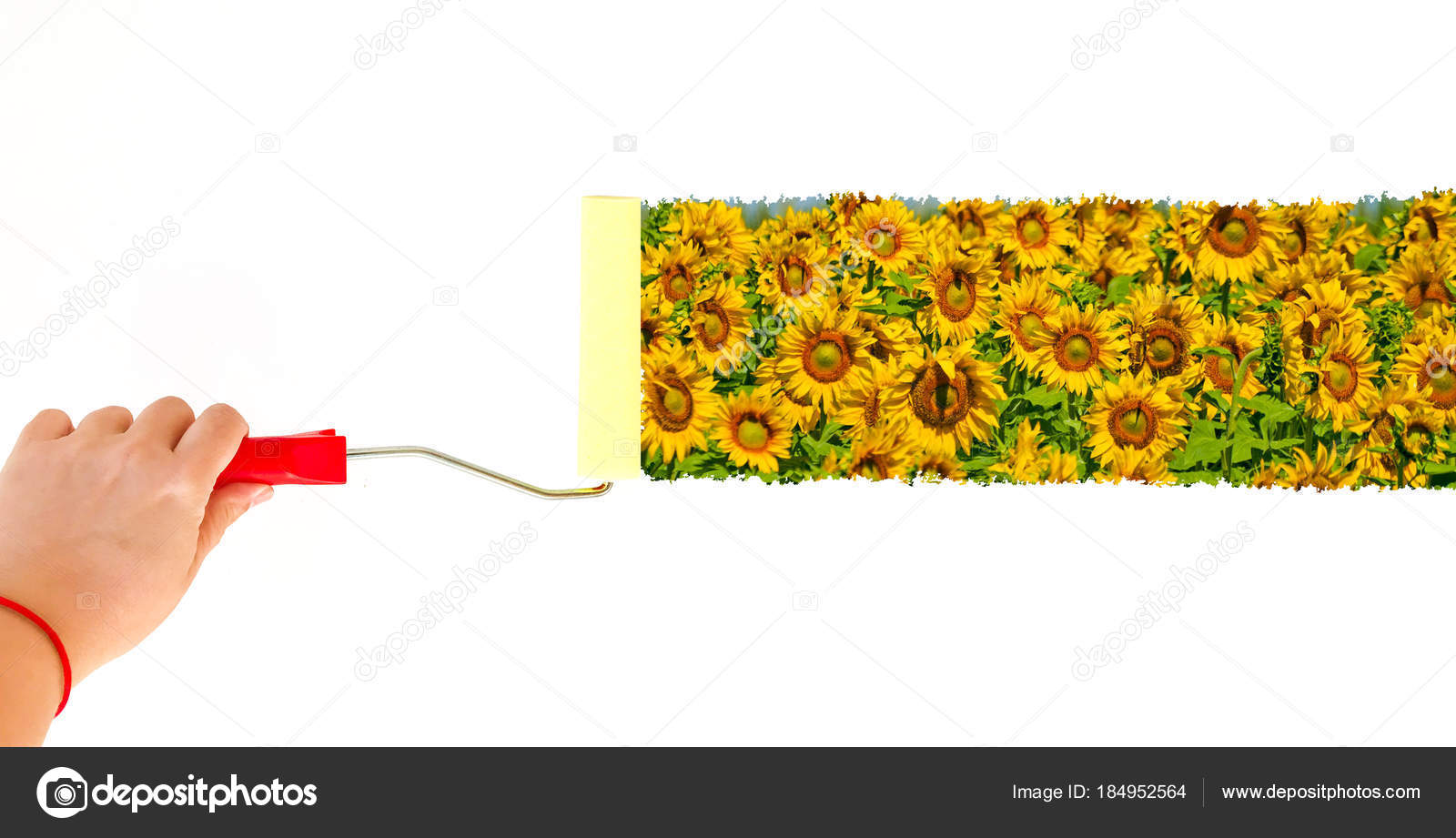 One person painting a landscape with sunflowers on a white wall with ...