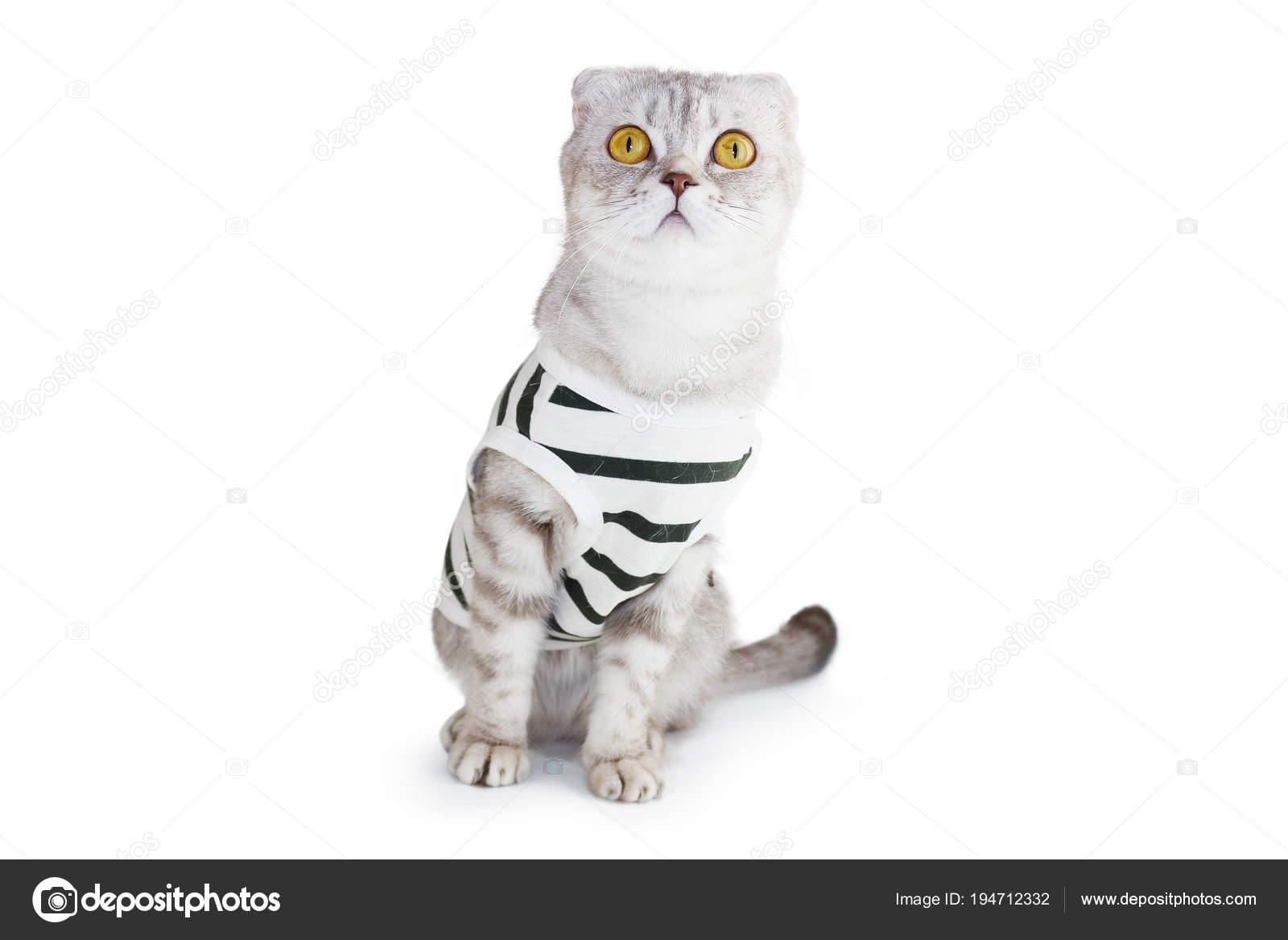 b68ff41fc412 γάτα σε ρούχα σε λευκό φόντο — Φωτογραφία Αρχείου © Doriti  194712332