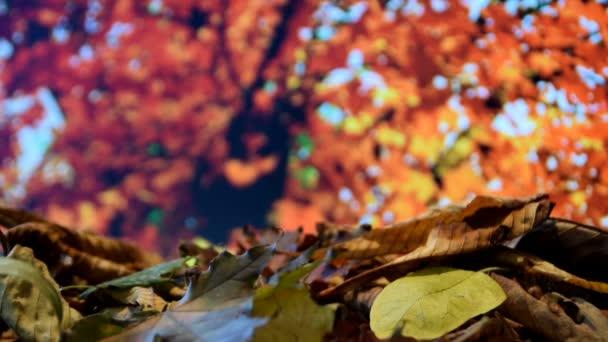 autumn leaves falling into a pile