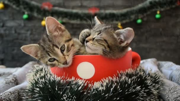 Kittens in a cup surrounded by holiday decoration