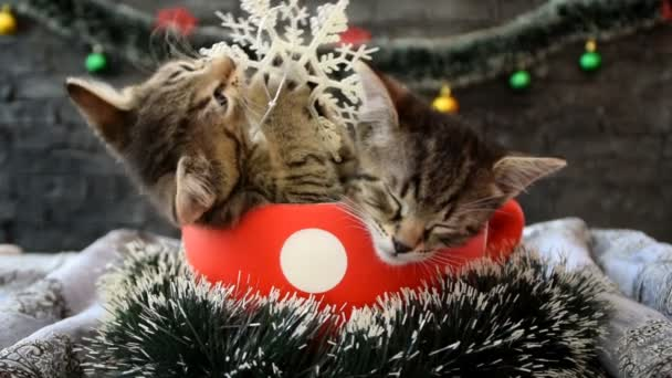 a kitten playing with a snowflake while another sleeps in a cup