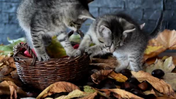 kittens are walking on dry leaves