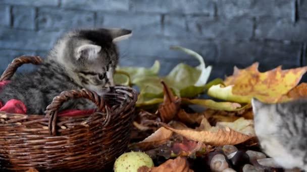 koťata jsou šňupání kolem suchého listí