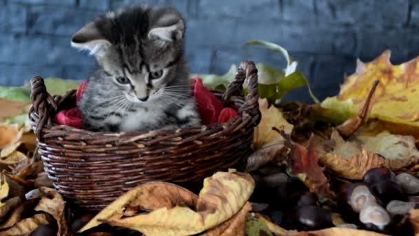 Kíváncsi cica kosarak