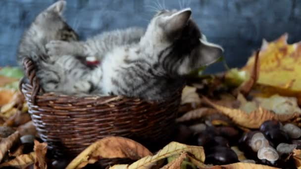 kittens are playing with each other in a wicker basket