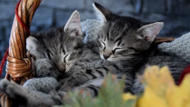 koťata v proutěném košíku s listy