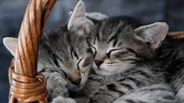 dvě koťátka, spí v proutěném košíku