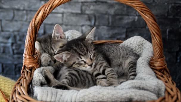 dvě rozkošné koťátka spí v proutěném košíku
