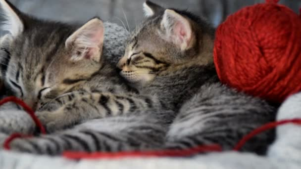 cuddled kittens with a ball of wool