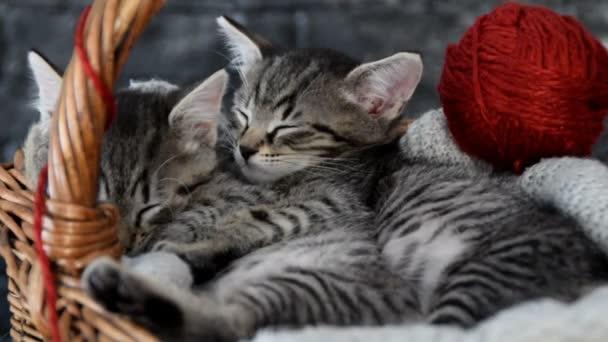 cuddled kittens in a wooden basket