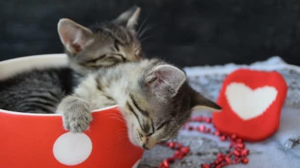 szép cica, alszik egy csésze