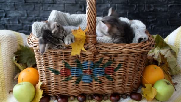 Two litle kittens playing with leaves in a wicker basket