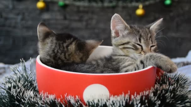 cup with sleeping kittens surrounded by holiday decorations