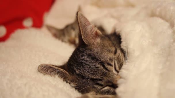 aranyos cica ébredés egy álom