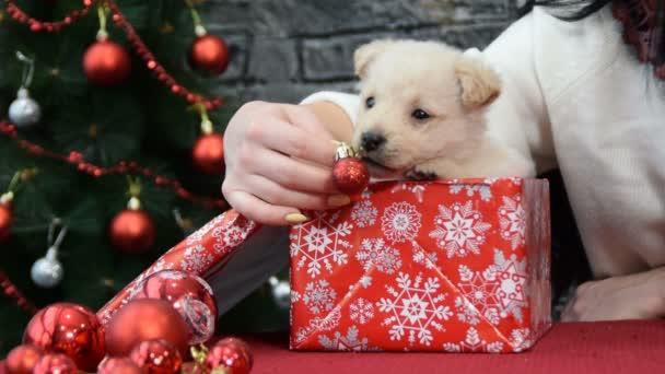 bílé štěně v duchu dovolené obklopený novoroční dekorace