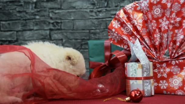 Mix strom scén, krásné bílé štěně v duchu dovolené obklopený novoroční dekorace