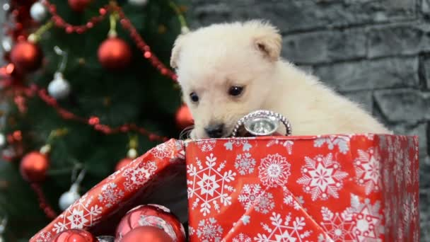 kombinace šesti scény, krásná kočka a bílé štěně v duchu dovolené obklopený novoroční dekorace