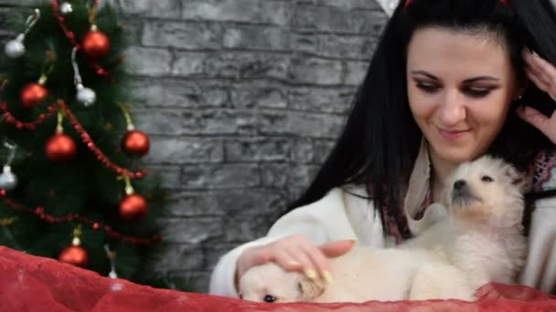 mix of four scenes, beautiful girl with  white puppies  in holiday spirit surrounded by New Years decoration